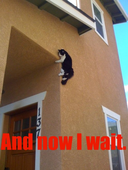 And Now I Wait - funny cat