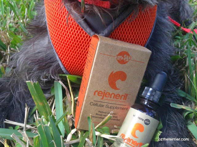 Clinically-proven Rejeneril by Ultimate Pet improves an aging dog's health and energy levels