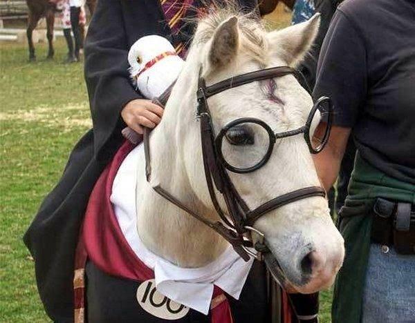 Lustiges Pferdebild Pferd Als Harry Potter Verkleidet
