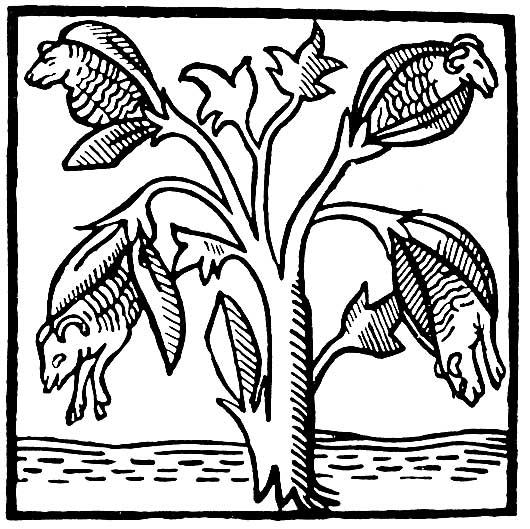 John Cotton Books: Black And White: The Vegetable Lamb Of Tartary