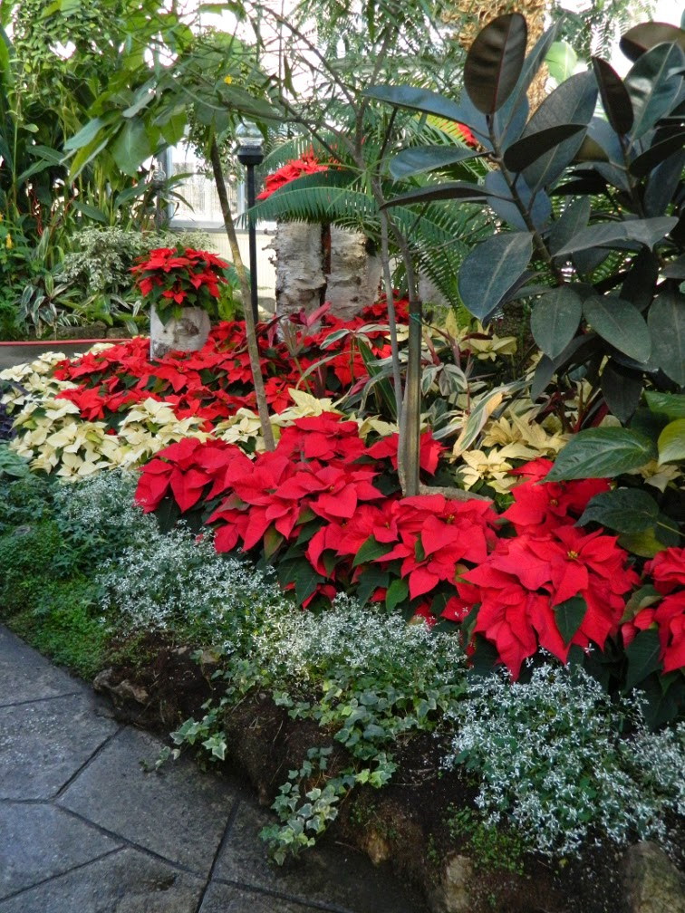 Layers red white poinsettias Allan Gardens Conservatory Christmas Flower Show 2014 by garden muses-not another Toronto gardening blog