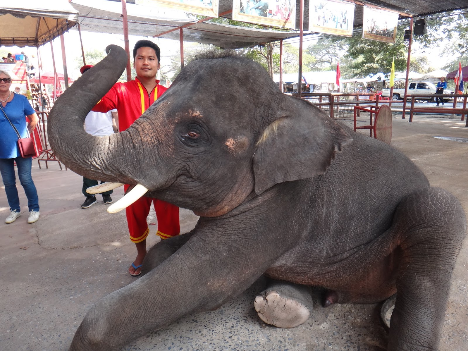 We Met This Cute Baby Elephant While On Our Day Tour Of Ayutthaya From Bangkok Thailand He Was Wandering Around The Entrance To One Temples