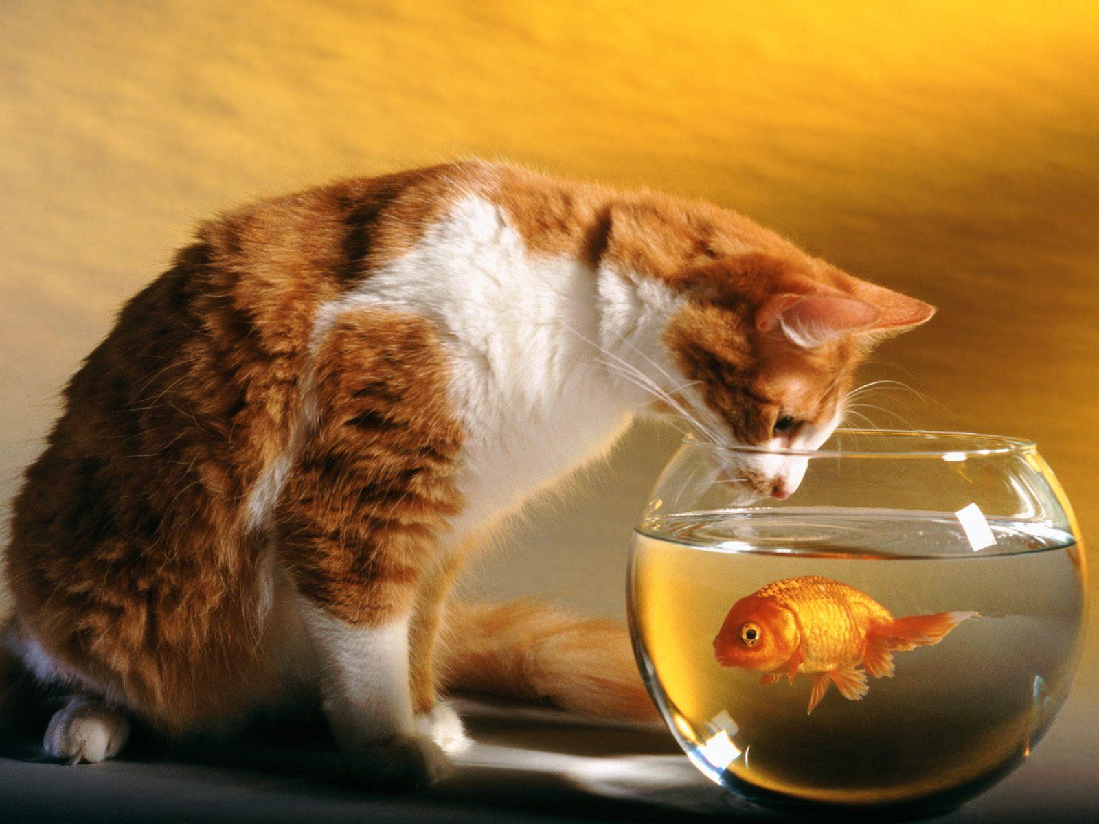 http://2.bp.blogspot.com/-owth1A61SJg/T2R8XtBhQXI/AAAAAAAACss/aKSE_2eN-yE/s1600/Cute+HD+Cats+Wallpaper+7.jpg