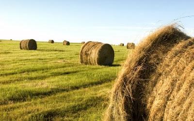 Λινάρι: Μια ξεχασμένη καλλιέργεια με μεγάλες προοπτικές