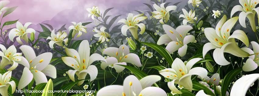Couverture facebook fleur de lys