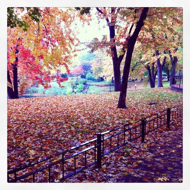 Montreal automne parc