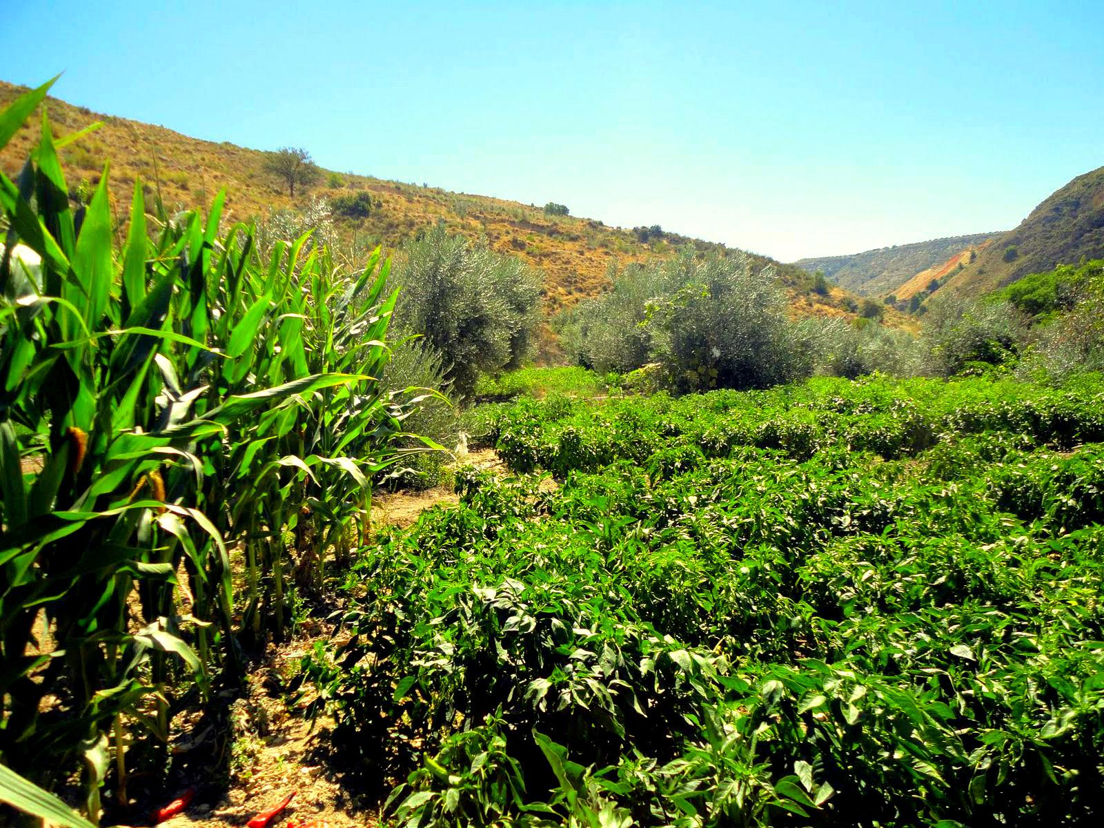 Ibiza Bargeld in bwin bwin, wie zu spielen - Fincas 9 - 12 Personen -