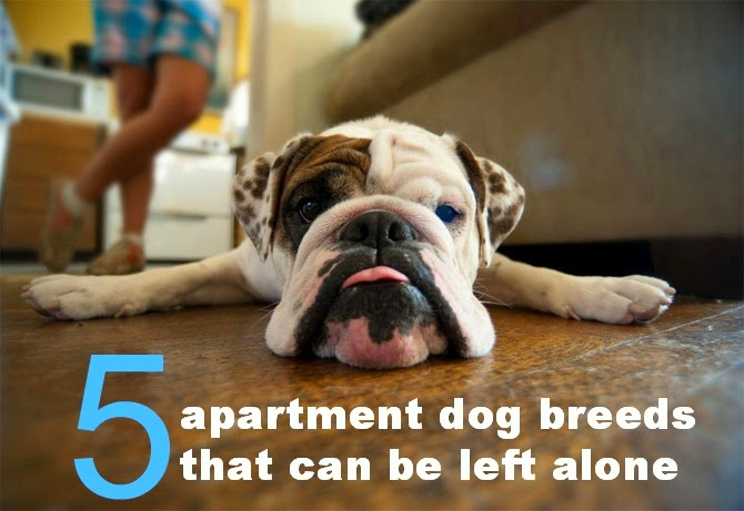 Appartment Dog 28 Images Best Apartment Dogs Fetch Pet