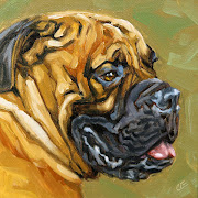 Bones is a Bull Mastiff. He looks formidable, but he is a pushover.
