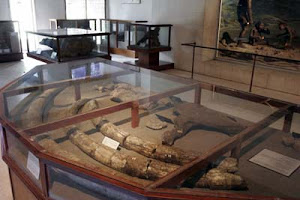 http://2.bp.blogspot.com/-oyD99RuuUnc/TrtFFyO5R0I/AAAAAAAAAuM/ihZRjyd0R_Q/s1600/fosil-sangiran.jpg