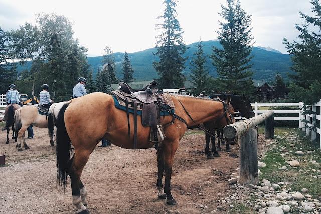 Horses at the Jasper Park Stables at the Faimont Jasper Park Lodge