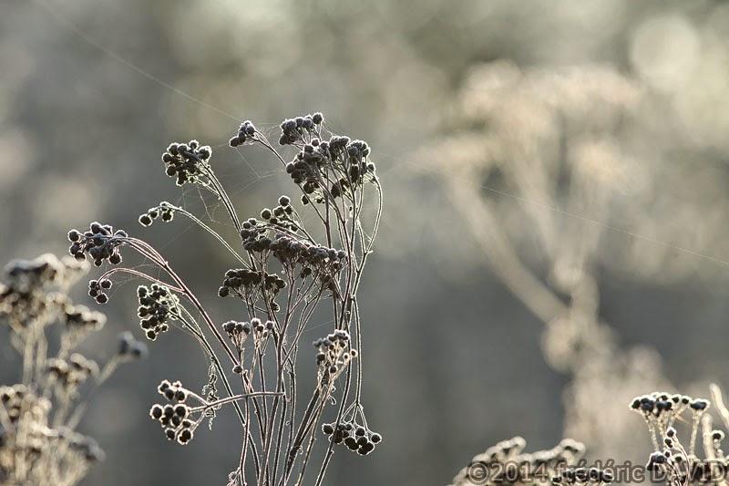 végétation froid gel givre
