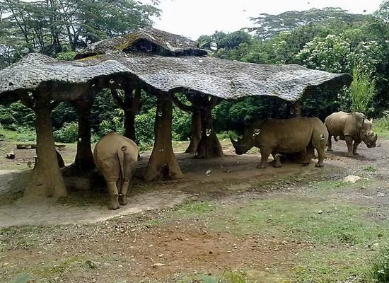 Taman Safari, Bogor