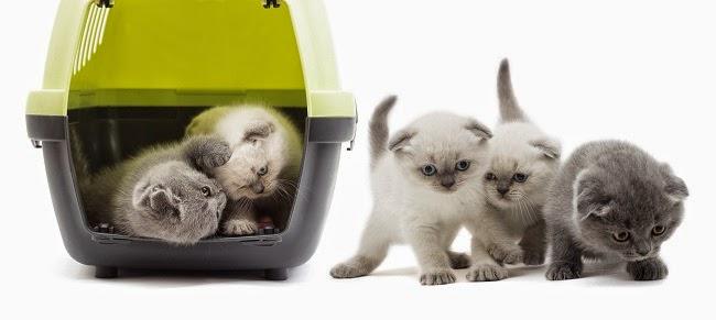 cat transport melbourne