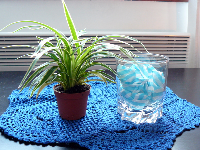 Lamirose un plante sur la table - Table plante ...