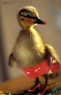 Funny+Duck+images.jpg