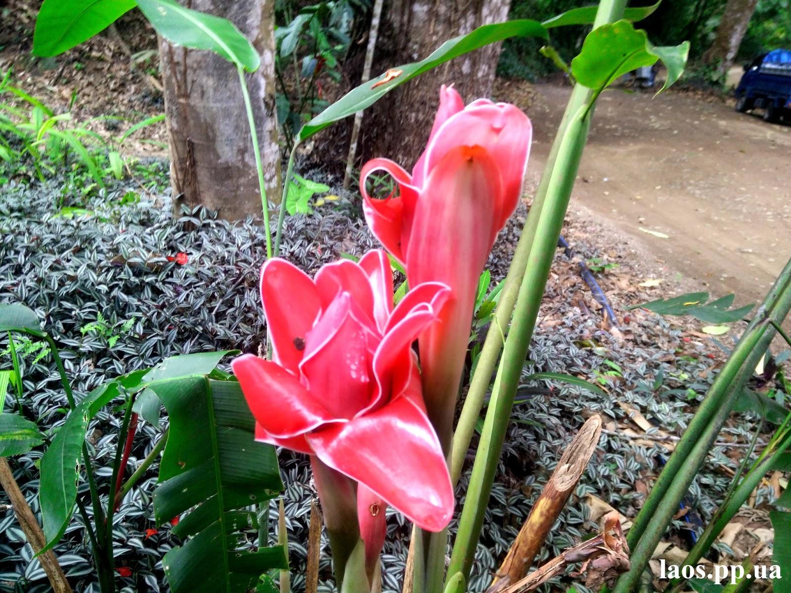 Флора и фауна в северном Лаосе