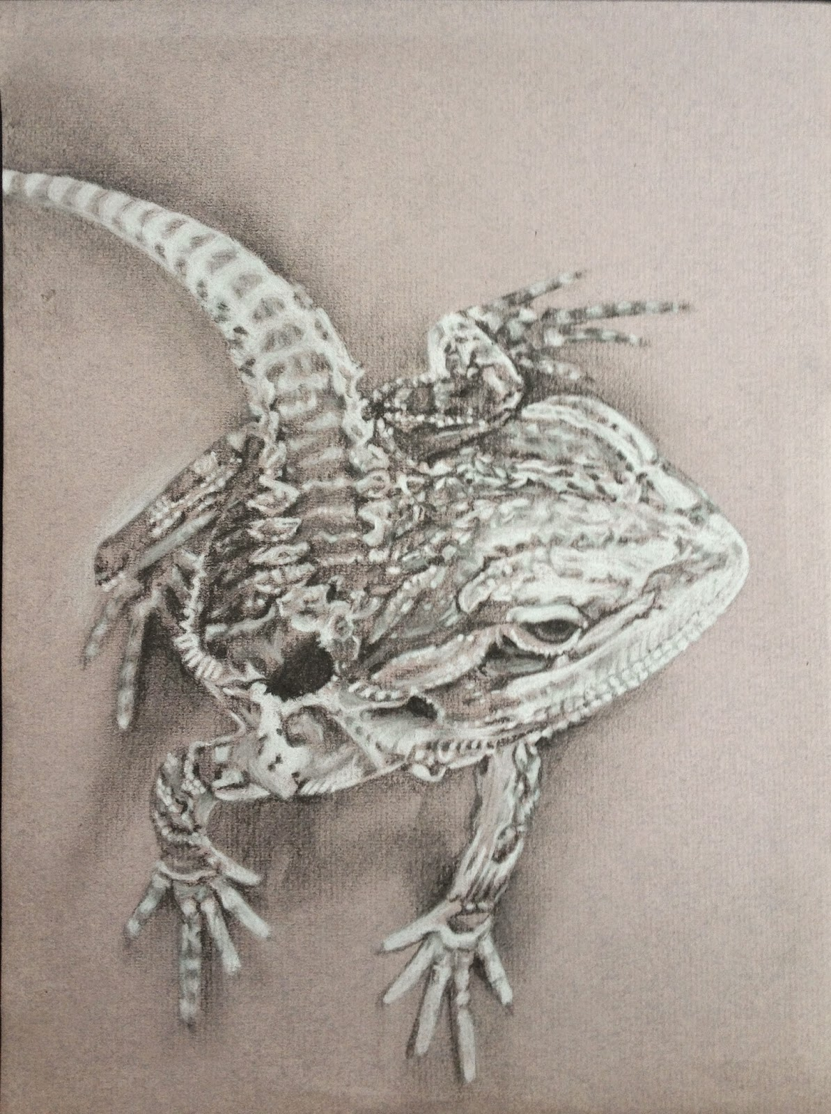 White black charcoal drawing, bearded dragon