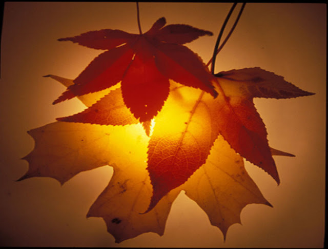 Autumn Blessings4