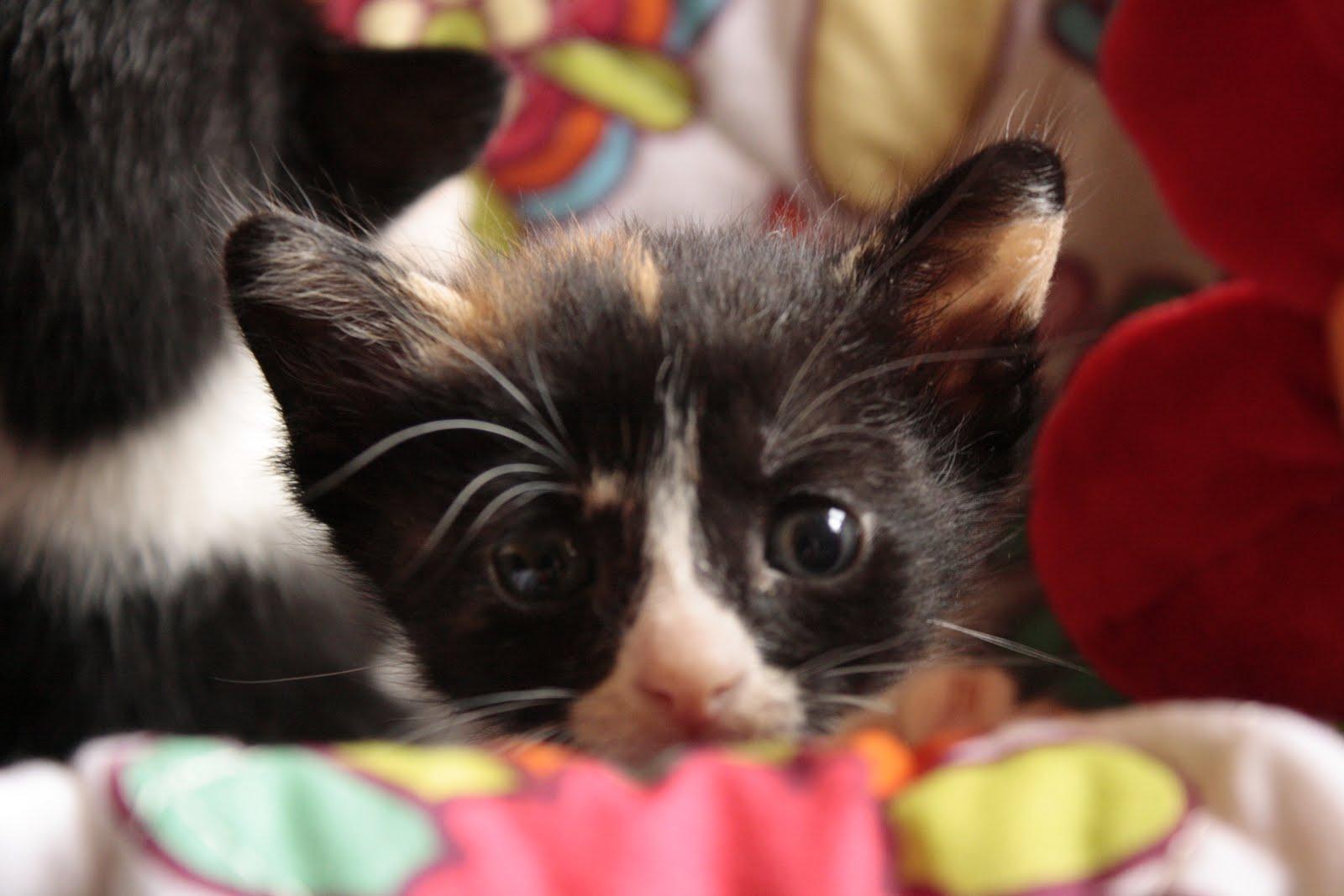 El gato malva el blog de los gatitos de la calle - Gatitos de un mes ...