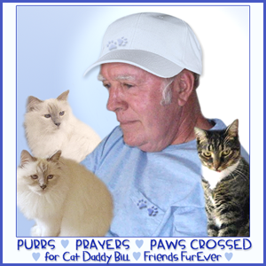 Purrs & Prayers for Cat Daddy Bill