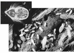 Penjelasan Tentang Komponen Biotik Biologi Indonesia