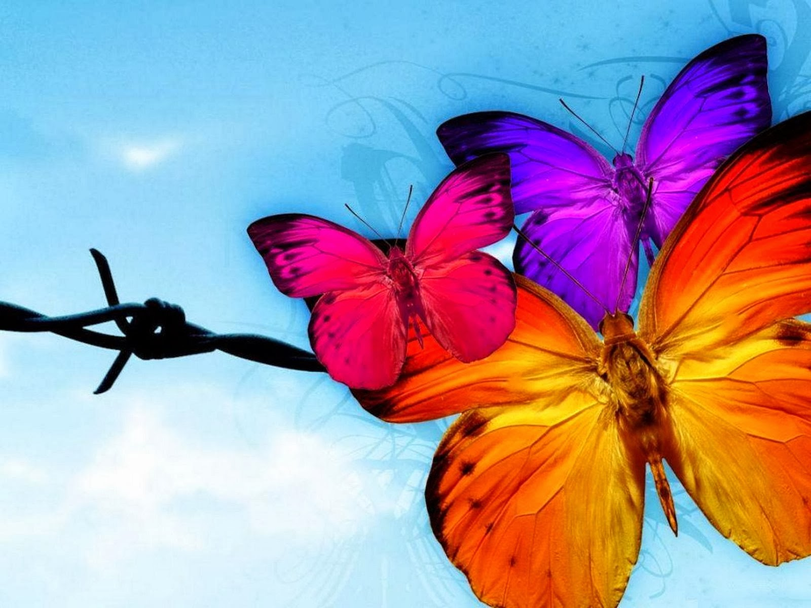 pink orange and purple butterflies free desktop wallpapers
