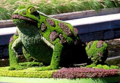 grass made frog