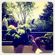 Frauenfüße auf einem Balkon, versteckt zwischen Pflanzen