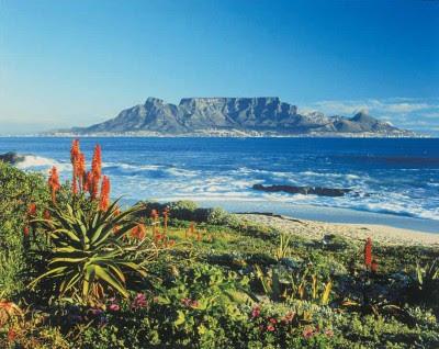 sudafrica1 ESTAS SON LAS FLORES DE SUDAFRICA