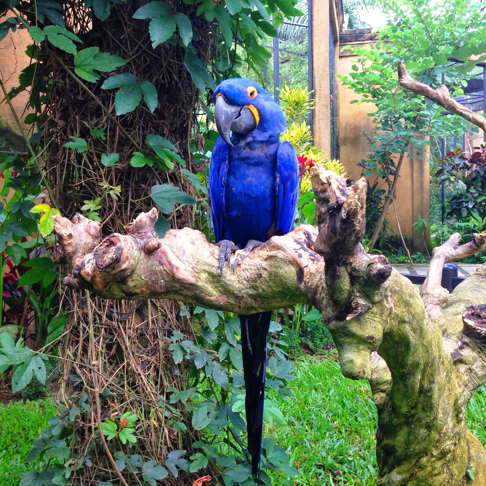 Promo Harga Voucher Tiket Masuk Anak Wisata Bali Bird Park Terbaru Aa6 1710 Macbear Baju Piyama Happy Cat Size 6 Abu Muda Bantall Living My Dream At Is Divided Into