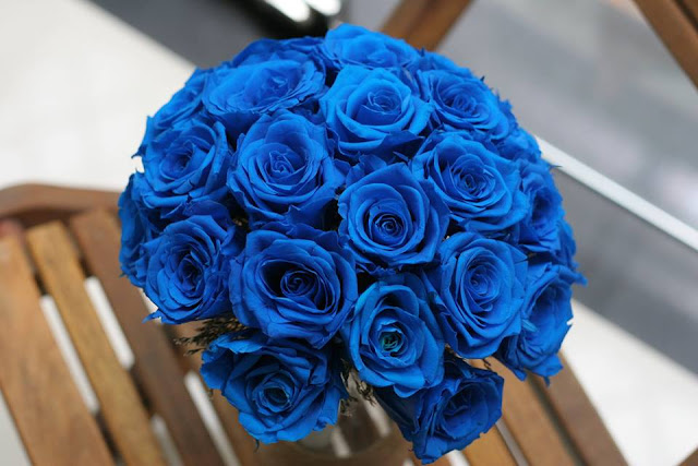 Đóa hoa hồng đẹp nhất