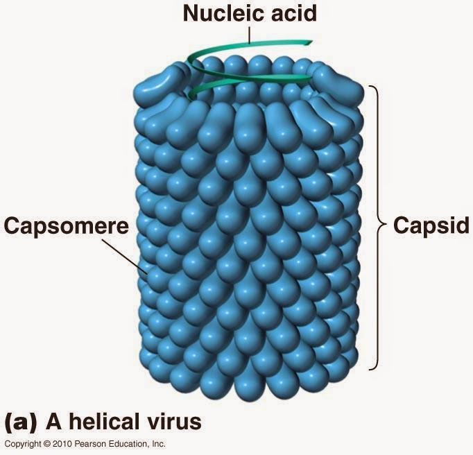 are viruses alive article writeup Here is your essay for students on viruses viruses are so small that they cannot be seen even with the highest magnification of the microscope using.