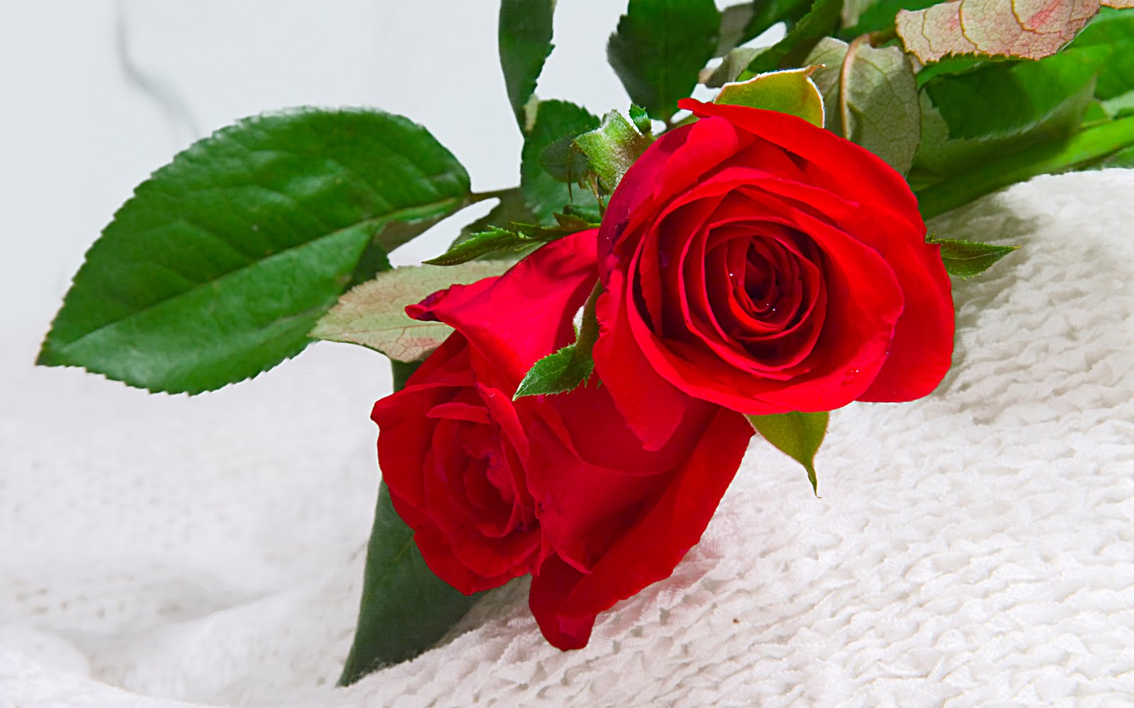 Beautiful Red Flowers Flowers Wallpapers