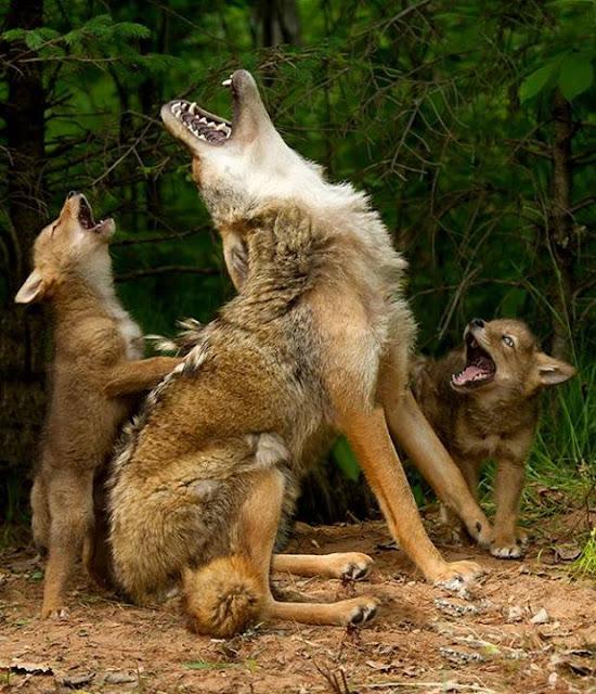 The Amazing wildlife photos taken by Ohio photographer, Debbie Dicarlo