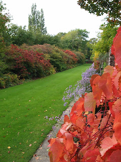 autumn leaves in the garden, Garden design London and Sussex