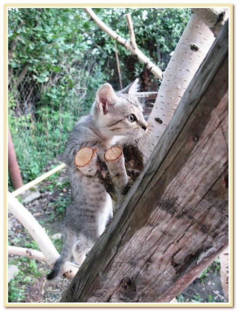 Малосольный огурец - ах, какой он молодец!