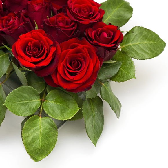 Amazing Red Roses Stock Photo