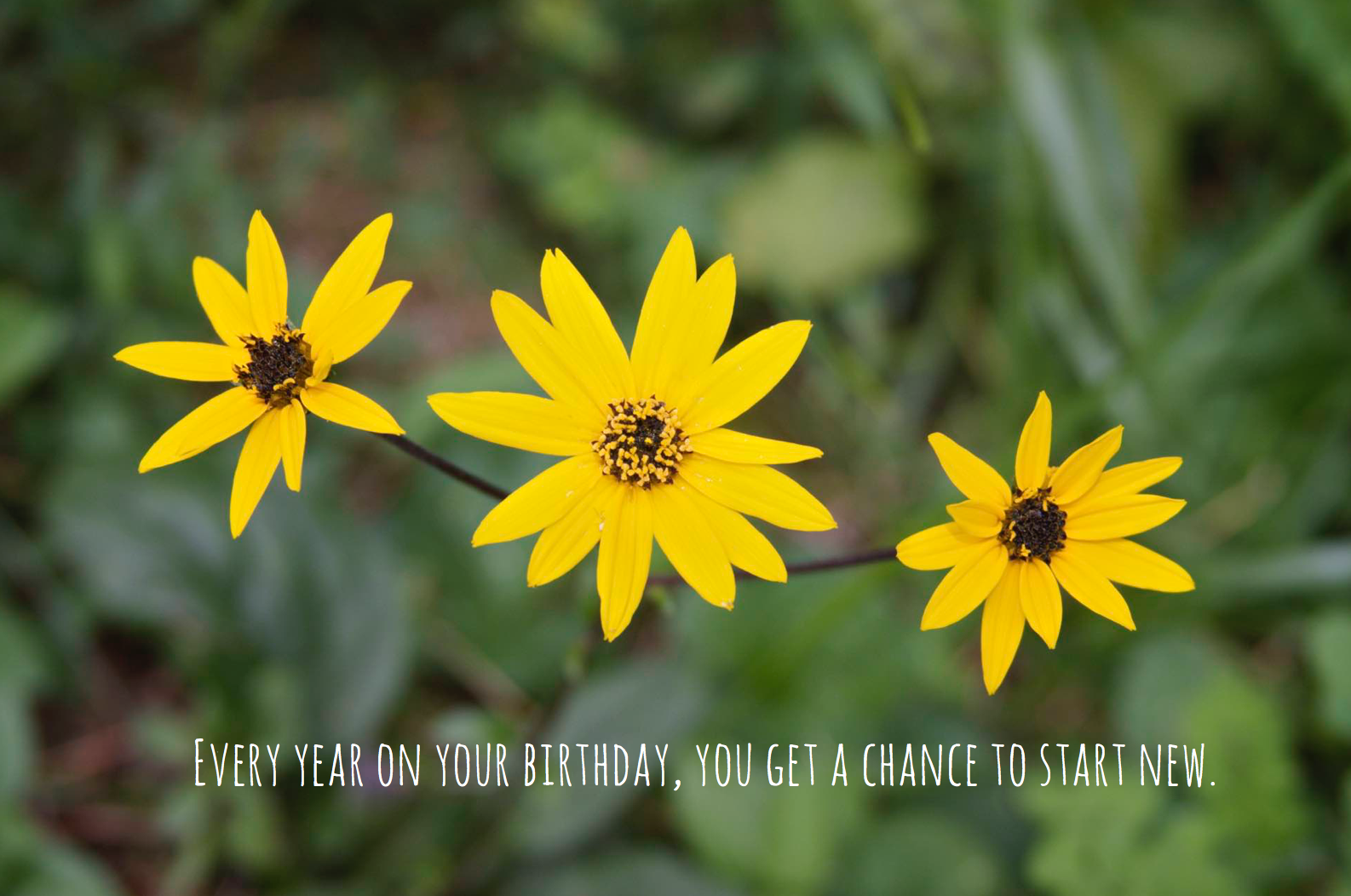 Birthday Quote | Sunday Photos with I Love It All