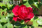 Award från Anette med bloggen vita rosor
