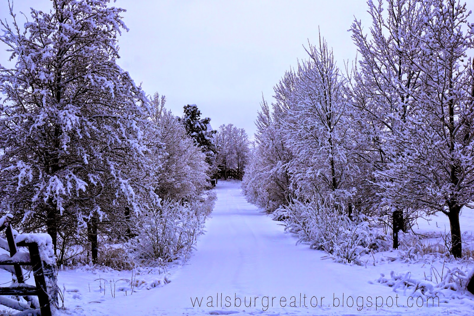 Winter in Wallsburg