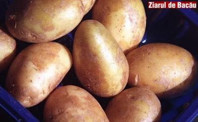как вырастить: картофель