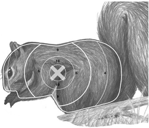 shooting a squirrel essay If you hunt deer with a muzzleloading rifle, squirrel hunting is even more   remove squirrel pieces and place them on paper towels that will.