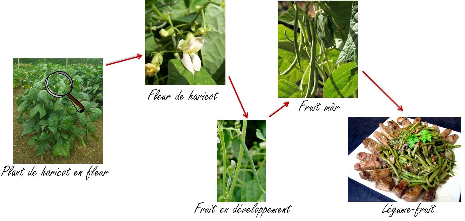 Maigrir avec la m thode montignac phase 1 menu bas ig du jeudi 11 juin 2015 - Haricot vert fruit ou legume ...