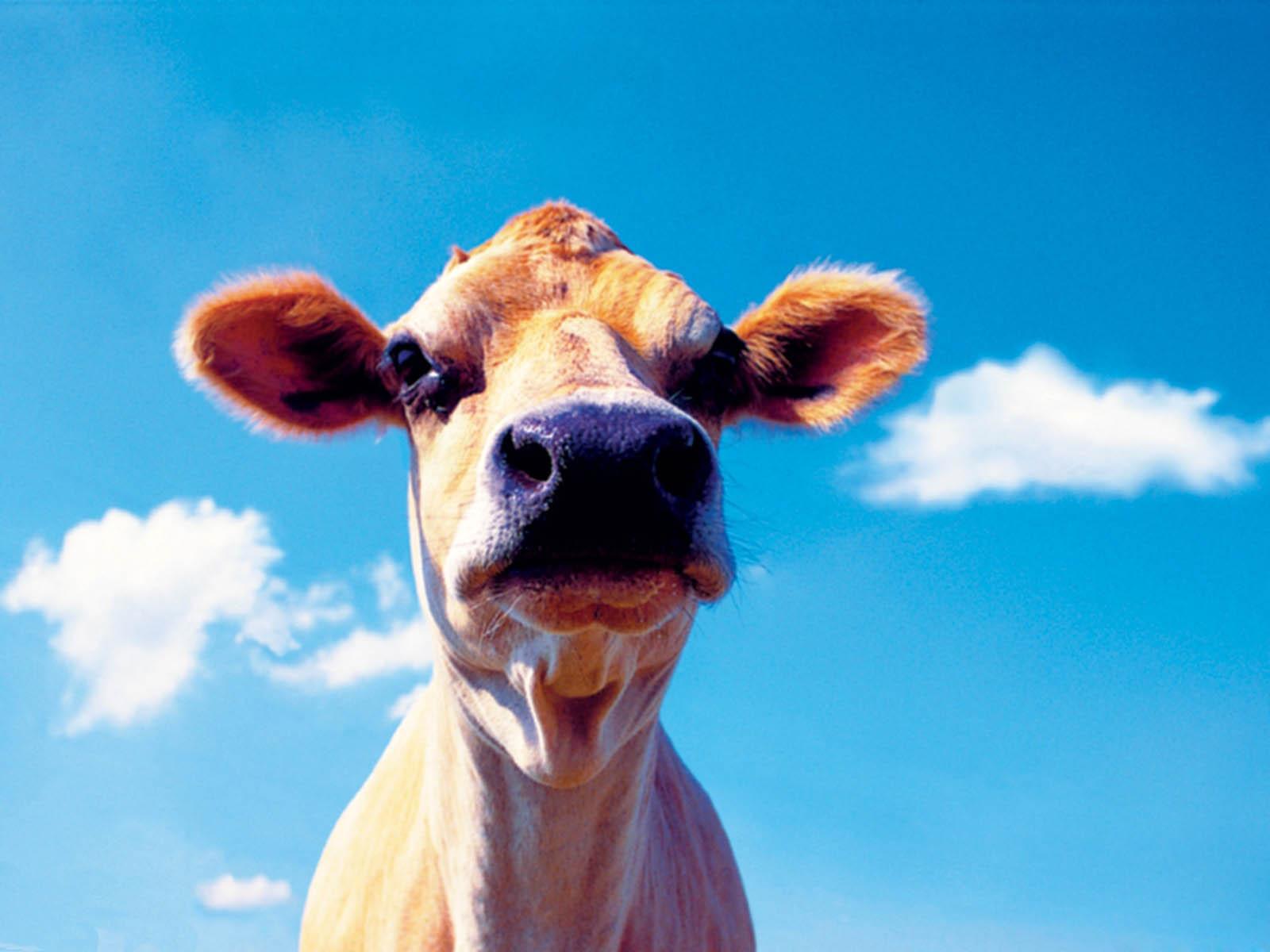 Tag: Funny Farm...