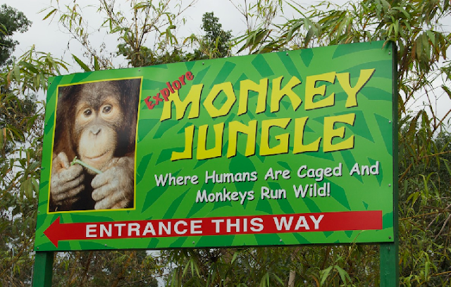 Zoológico de macacos em Miami