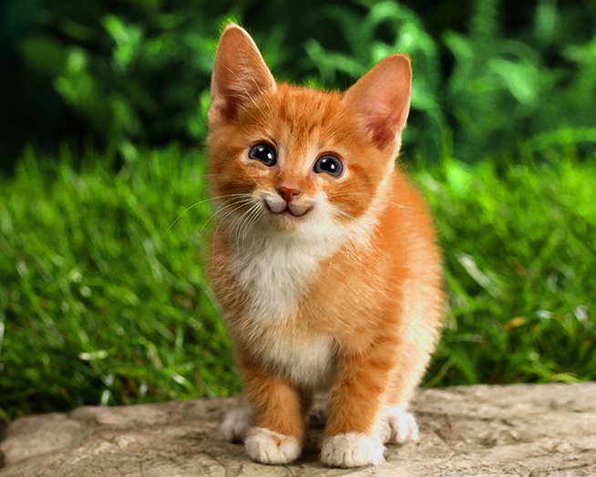 Tutorial Unik Cara Bikin Kucing Senyum Manis ~ Photoshop blog dan ...