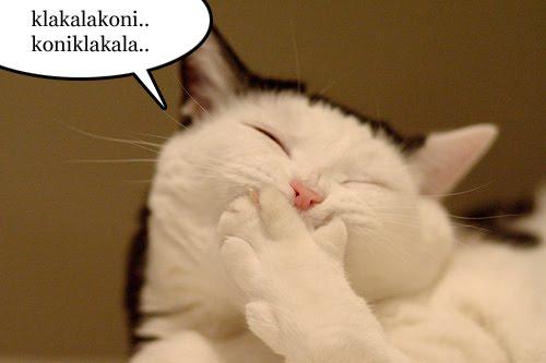 gambar kucing - gambar kucing