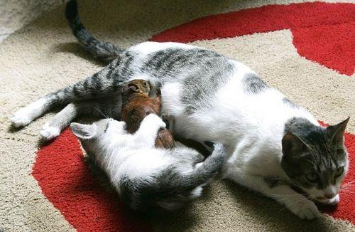 Kucing jaga anak monyet Tarsi