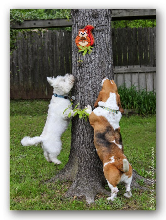 Basset & Westie catching PrideBites squirrel
